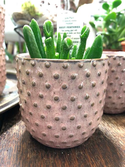 """Antique Pink 3"""" pot"""