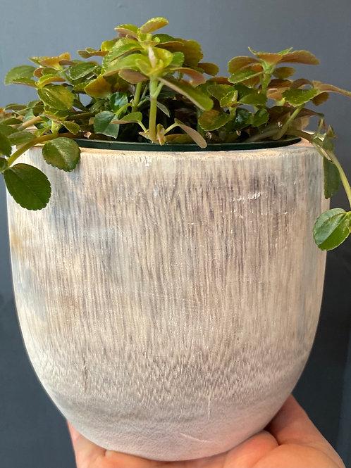 "Wooden Pot Cover 4"""
