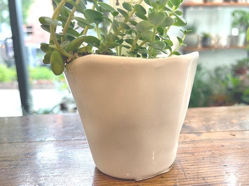 "Tiny White Pot 3"""