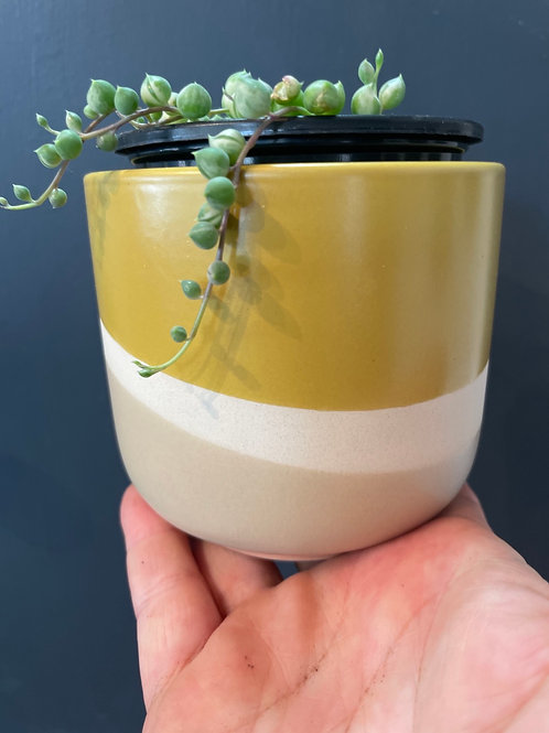 """Mustard Pot 3.5"""""""
