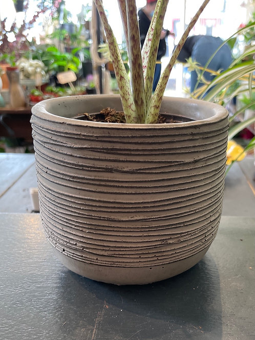 "String Pot Mocha 4"""