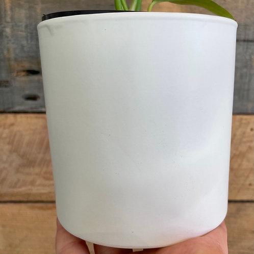 White Pillar Pot