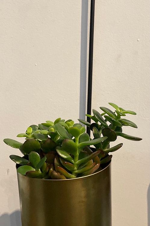 """Brass Pot Wall Planter (  holds 4"""" pot)"""