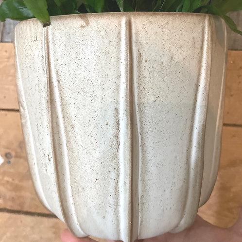 "Simple texture Pot 6"""