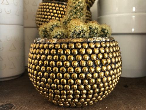 "Golden Polka Dot pot 3.5"""