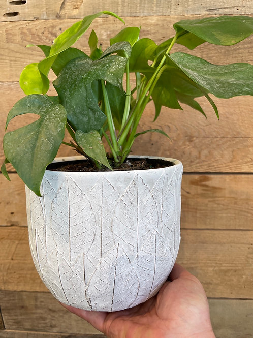 "Leaf Pattern Pot 6"""