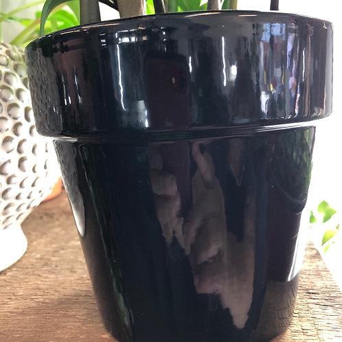 "Black pot with Rim 4"""