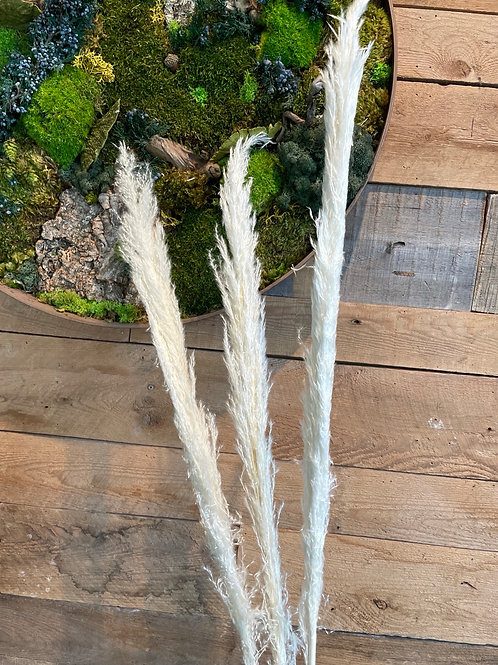 "Pampas Grass Bloom Dried 3 stems45"""
