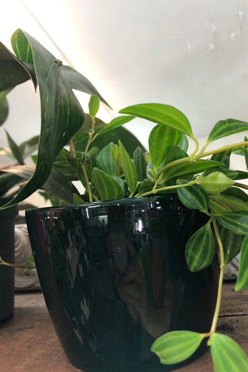 "Forest Green 4"" pot"