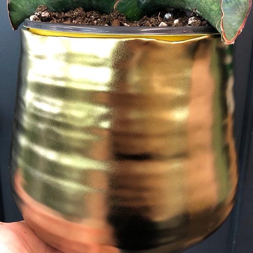 """Gold Ceramic Pot 6"""""""