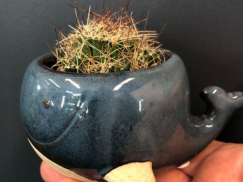 """The Tiniest Blue Whale Pot( 2"""" opening)"""