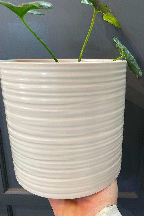 """Lined Pillar Pot 6"""""""