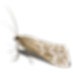 AdobeStock_23419313_up_w_moth_blank.png