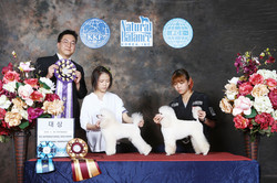 62nd KKF Grooming Competition
