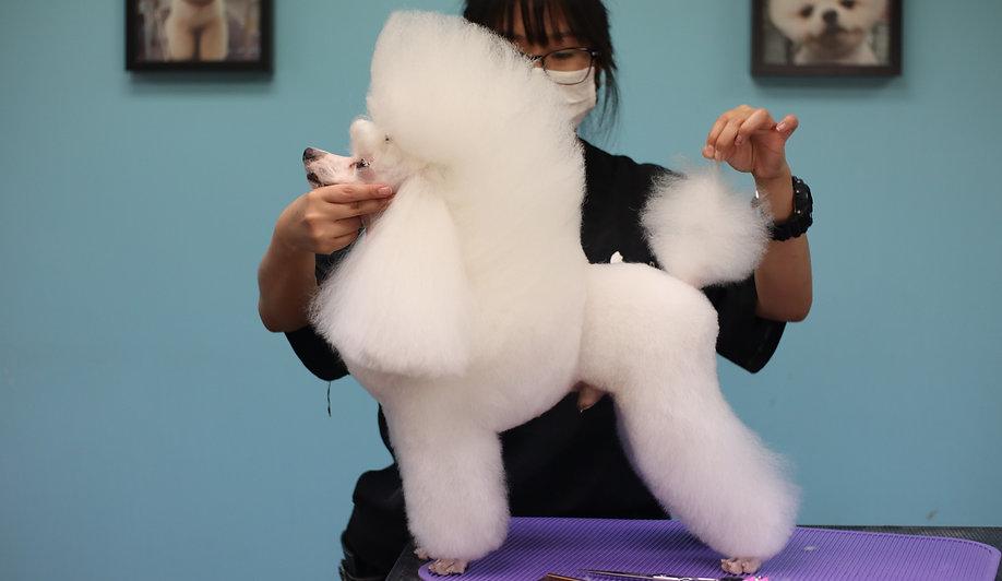 art-of-pets-poodle-grooming-school.jpg