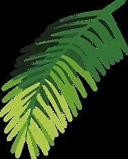 Folha tropical