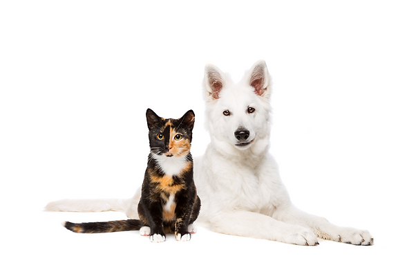 dog-and-cat-R2SWVYB72.png