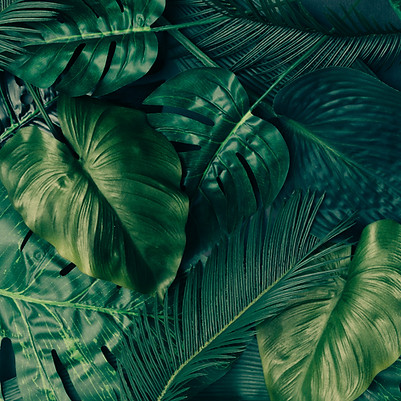 Creative tropical green leaves layout.jp