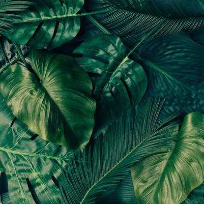 Creative tropical green leaves layout.jp