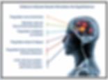 Nexalin and the Hypothalamus.png