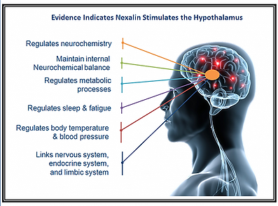 Nexalin and the Hypothalamus.png