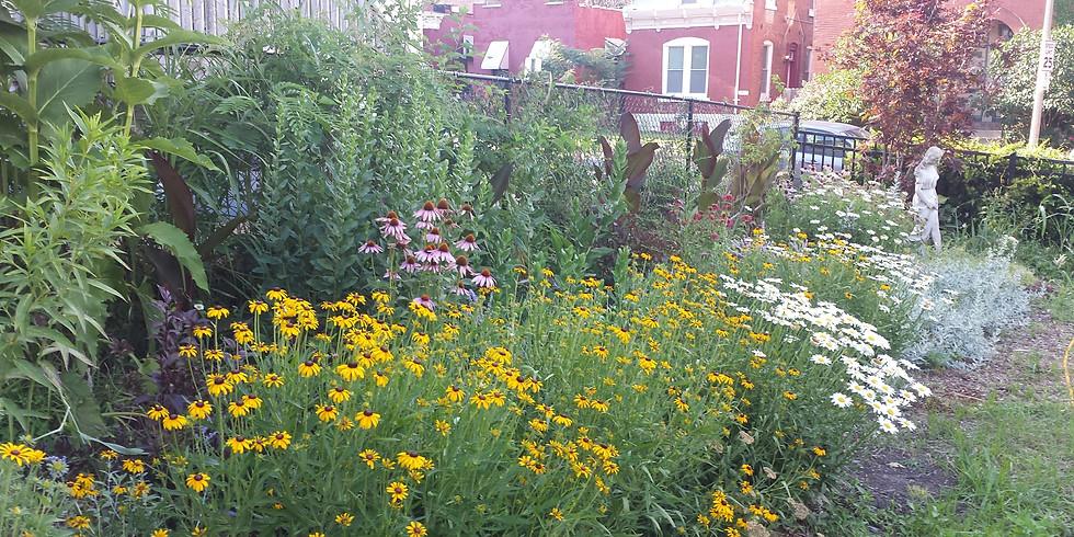 Our Neighborhood Garden Clean Up