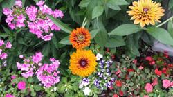 Our Neighborhood Garden Summer 2016