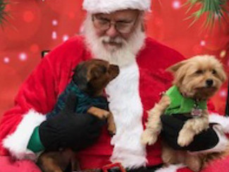 After the Party: Dog Park Christmas Party