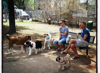 BPW Dog Park is Open for the Season