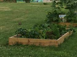 Community Garden July 2017