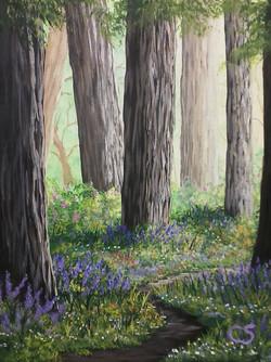 Redwood Walk