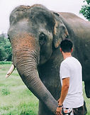 Asiatic Elephant with man.jpg