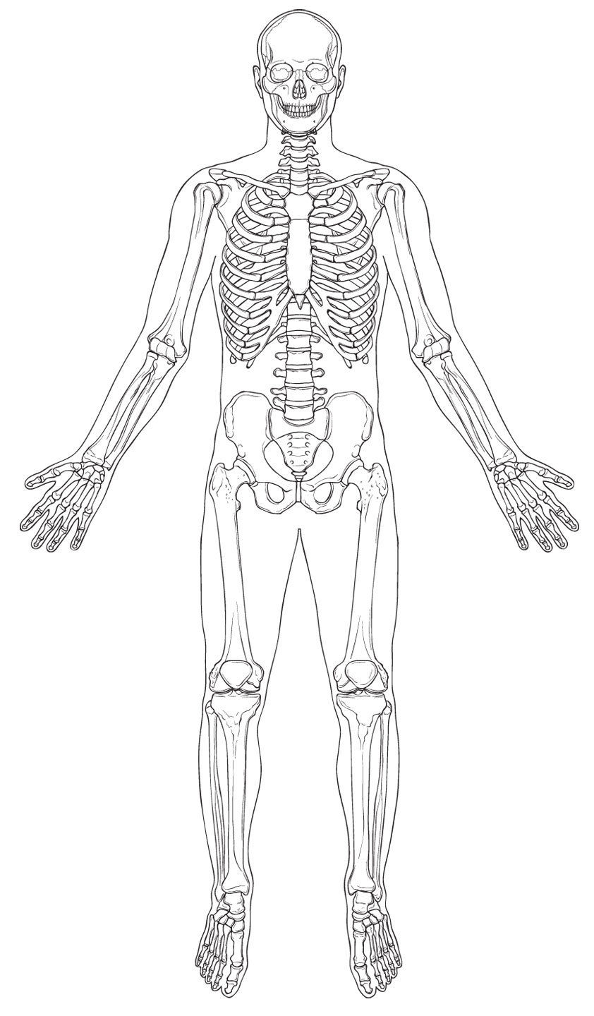 Human Skeleton Blank Diagram Image collections - How To ...