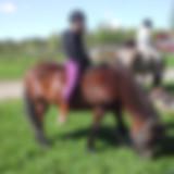 icelandic horse summer