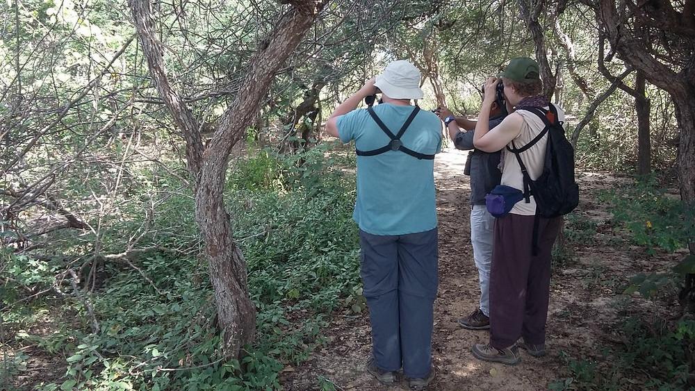 birding guajira