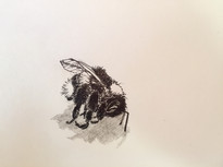 Day 21/2017: Dead bumblebee