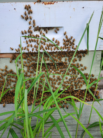 We have 2 hives on the farm!