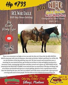 RCL War Eagle Gelding.jpeg