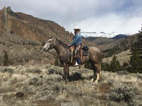 Same Quality Horses - New Way to Bid