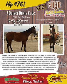Quincy Bred Yearling Stud Prospect.jpeg