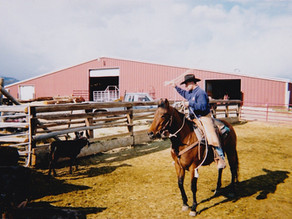 When it comes to training horses, what is the biggest trade secret?