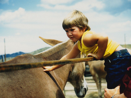 The Question: Have you ever struggled to connect and get along with a horse?