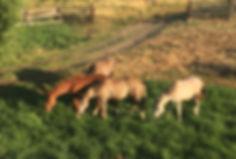Oliver Horses Cody, WY
