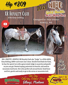 XR Royalty Cash Gelding for sale.jpeg