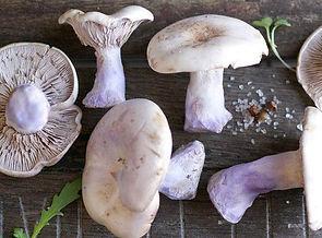 blue foot mushrooms.jpg