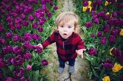 Tulip-1-139e copye