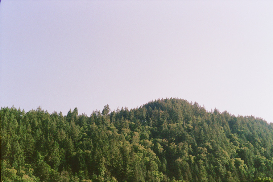 Landscape of treeline on Bowen Island, BC, Canada.