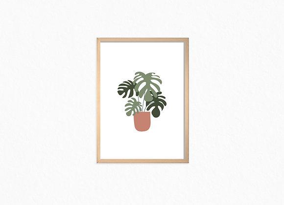 Monstra plant