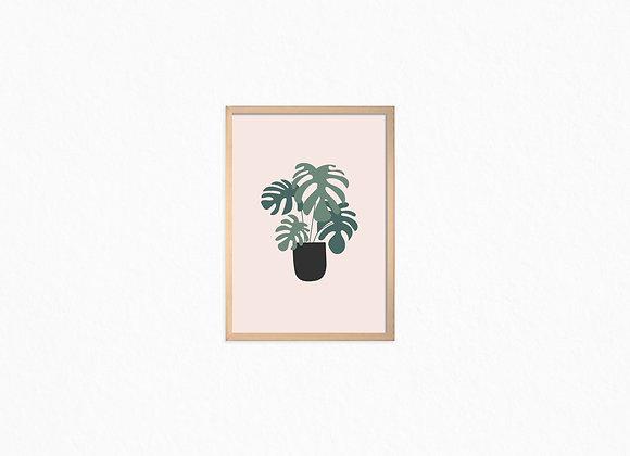 Monstra plant, Black