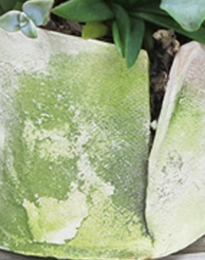 Mossy Pot Detail